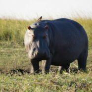 Best of Botswana & Zambia in Photos
