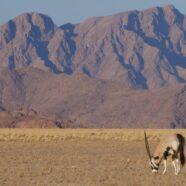 Navigating Namibia